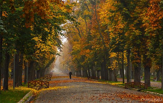 Parcul Central Simion Bărnuțiu, Cluj-Napoca